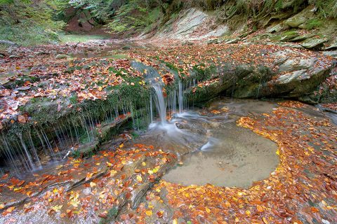 La selva de Irati, un entorno donde perderse y desconectar