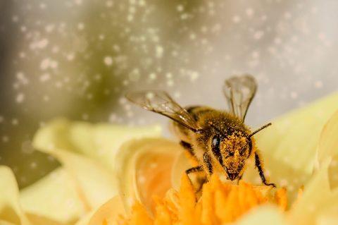 síntomas alergia al polen