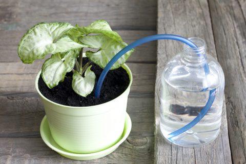 Cómo crear tu propio sistema de riego